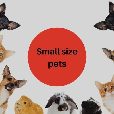 Small dogs image